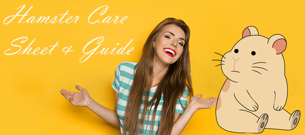 Hamster Care Sheet & Guide - How to Care For Your Hamster