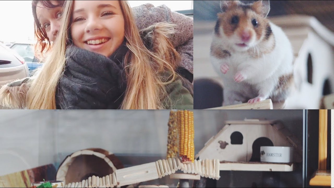 shopping with mum amp new hamster cage   hamster care sheet