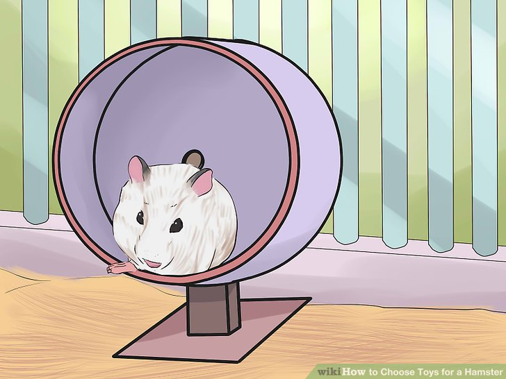Choose-Toys-for-a-Hamster-Step-4