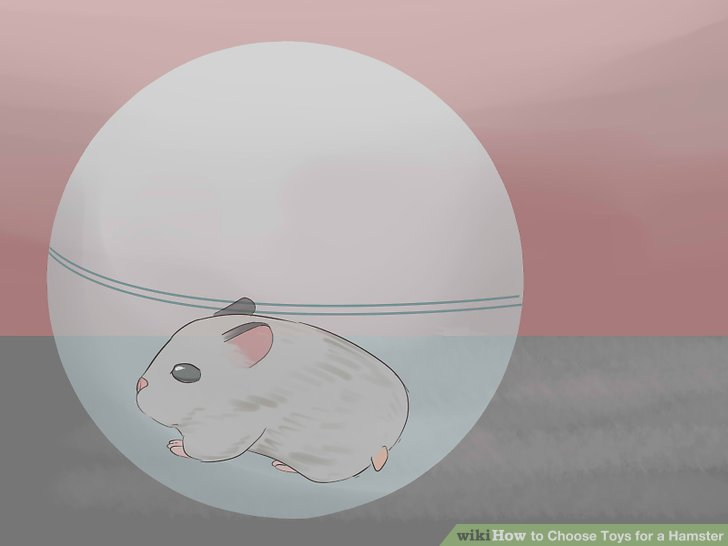 Choose-Toys-for-a-Hamster-Step-5